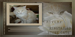 ringtailed story cats